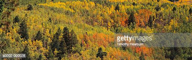 forest in autumn - timothy hearsum stock-fotos und bilder
