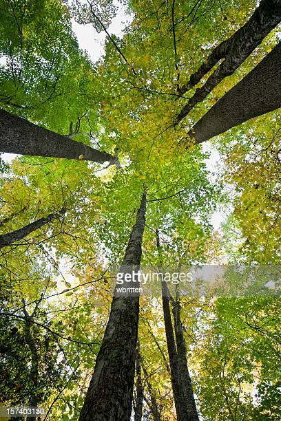 forest in autumn series (xxl) - roaring fork motor nature trail stock pictures, royalty-free photos & images