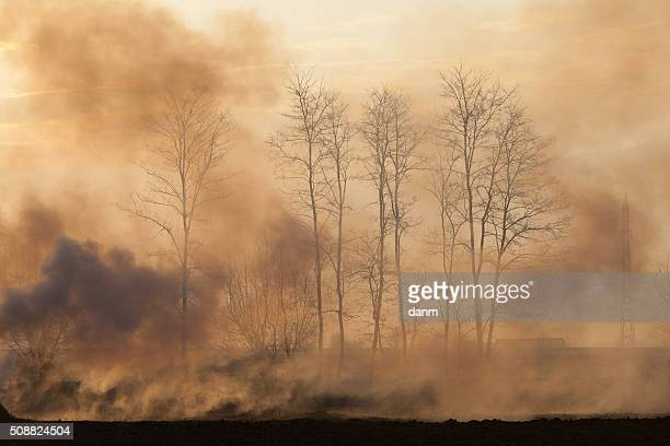 forest in fire with smoke