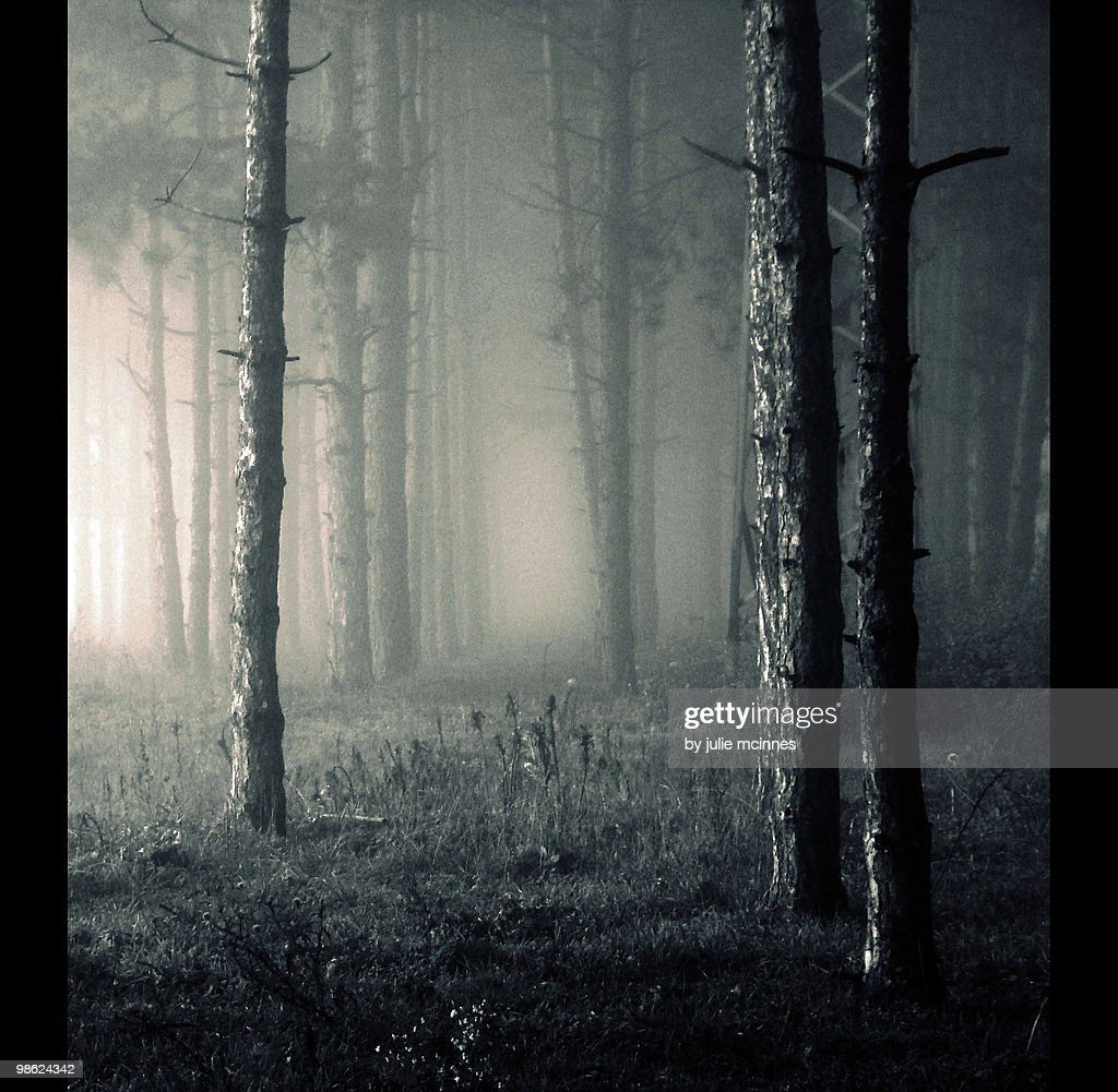 Forest in fog : Stock Photo