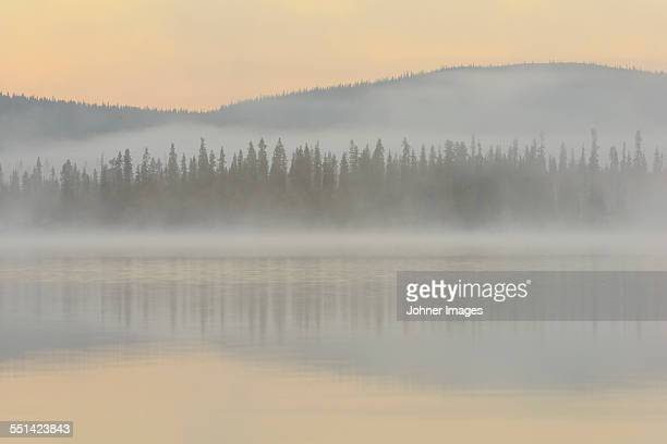Forest in fog reflecting in water