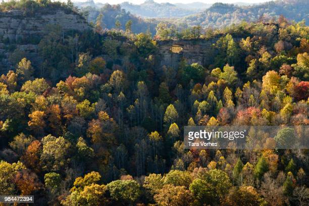 a forest in kentucky, usa. - kentucky stock pictures, royalty-free photos & images