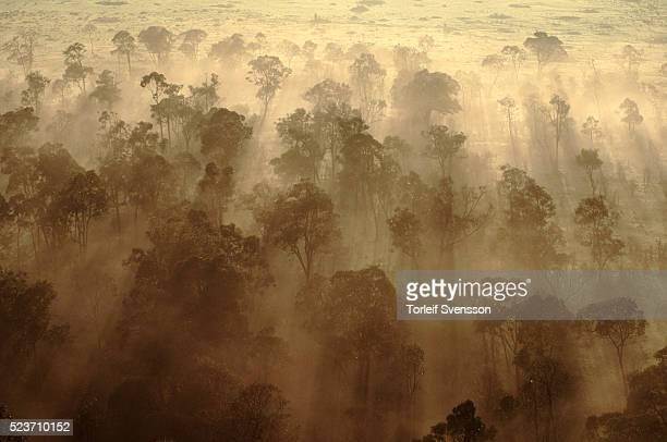 forest in masai mara national reserve - nature reserve stock pictures, royalty-free photos & images