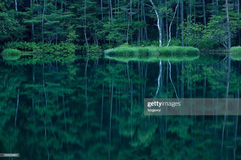Forest in mirror : ストックフォト
