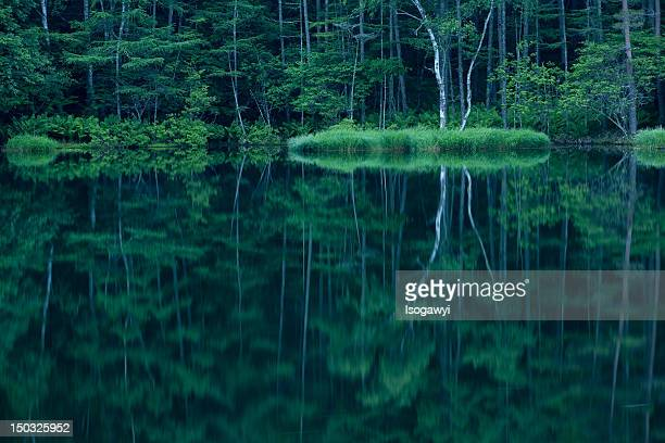 forest in mirror - isogawyi stock pictures, royalty-free photos & images