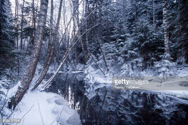 forest in snow reflecting in river, finland - teemu tretjakov stock pictures, royalty-free photos & images