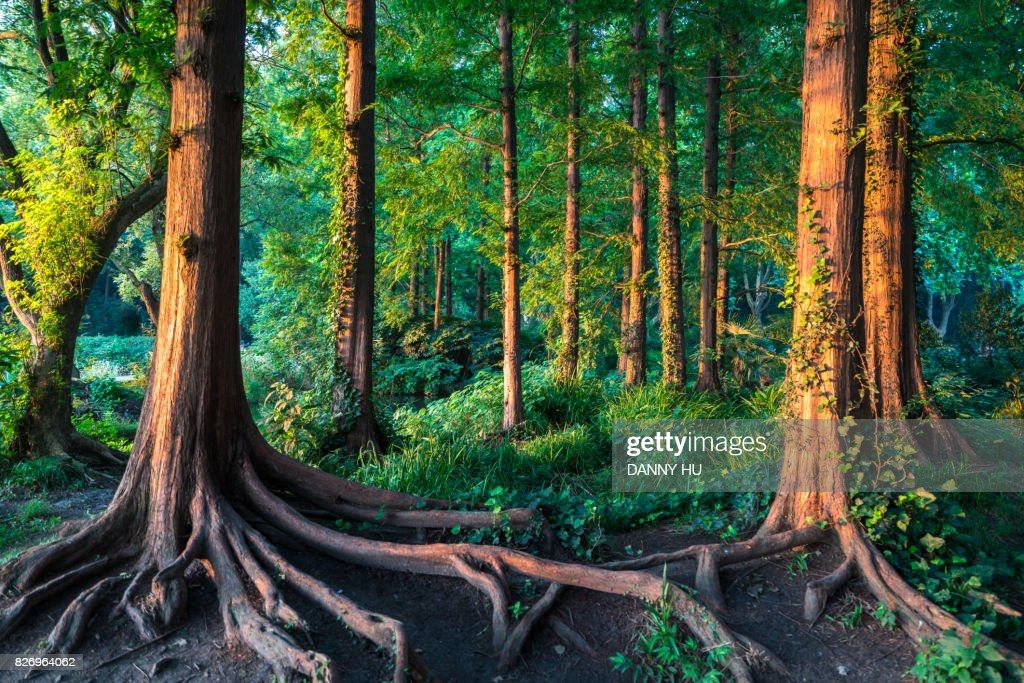 forest in summer : Stock-Foto