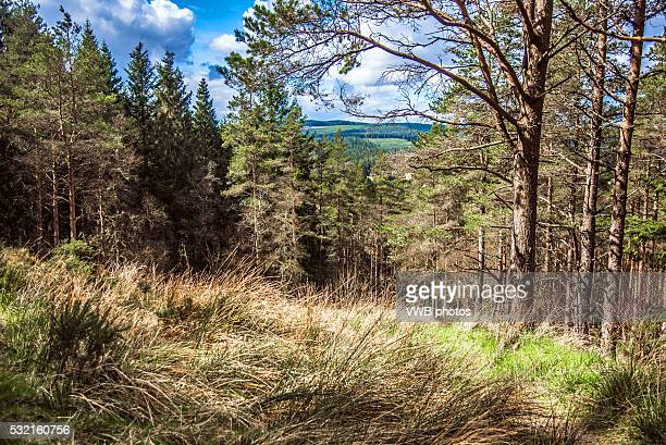 forest in sunlight, kielder - northeastern england stock photos and pictures