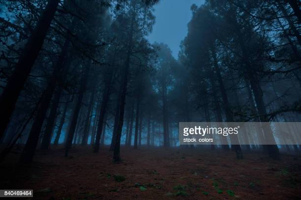 forest in the night time