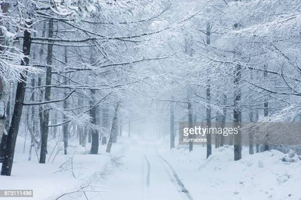 forest in the snow season - snowing stock pictures, royalty-free photos & images