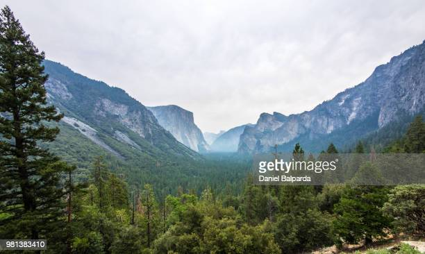 Forest in valley, Tunnel View, Yosemite National Park, California, USA
