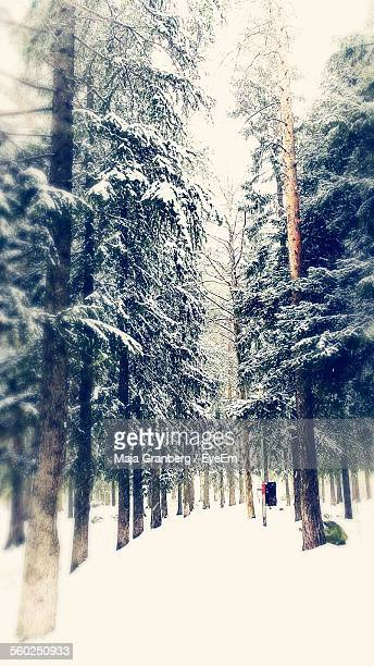forest in winter - chilly bin stock photos and pictures