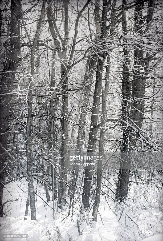 Forest in winter : Stockfoto