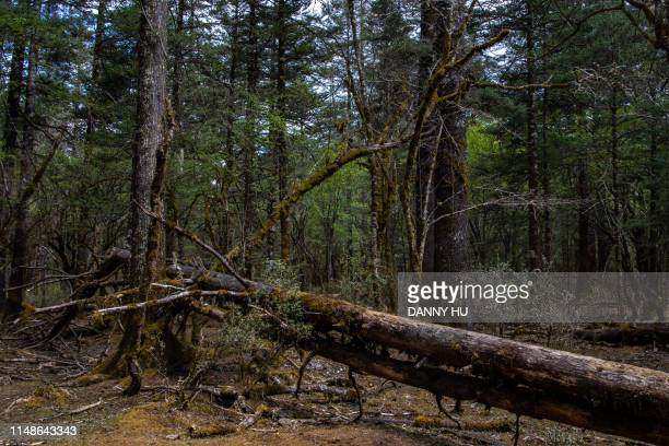 forest in yu long mountain - south china stock pictures, royalty-free photos & images