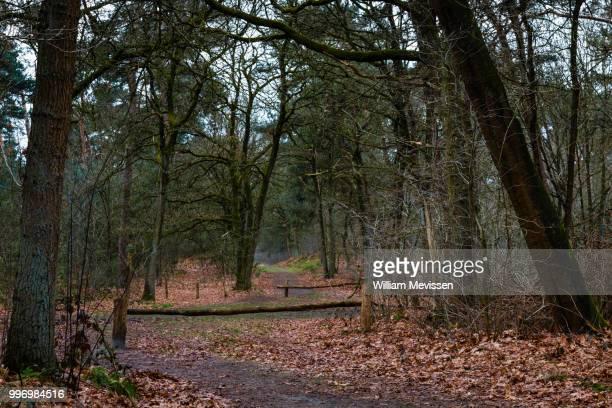 forest intersection - william mevissen fotografías e imágenes de stock