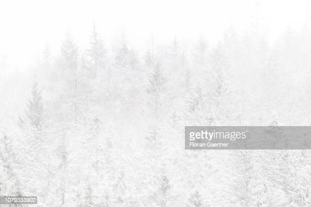 A forest is pictured during a snow storm near the germanpolishczech border triangle at the Zittauer Mountain on January 02 2019 in Waltersdorf Germany