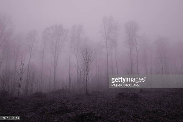 A forest is pictured on a foggy day in Essen Germany on December 21 2017 PHOTO / Patrik STOLLARZ /