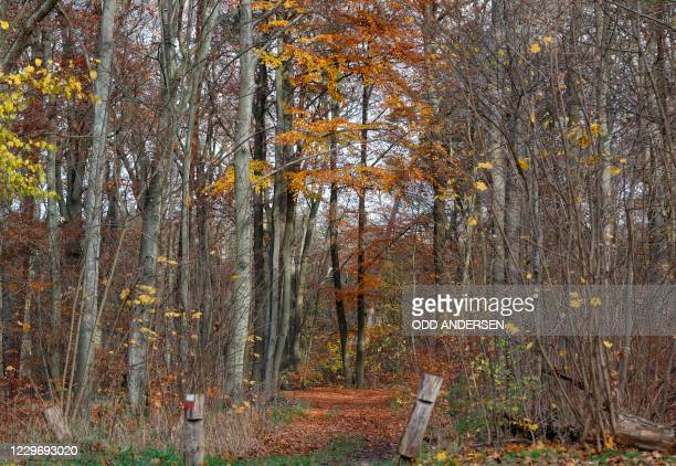 Forest is pictured on November 20, 2020 in an area where walkers found on November 8 parts of bones that were identified as human bones. - German...