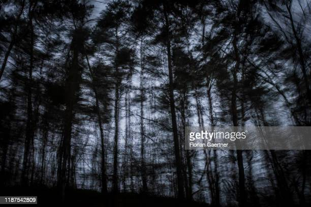 A forest is pictured with long exposure on December 08 2019 in Brandenburg Germany