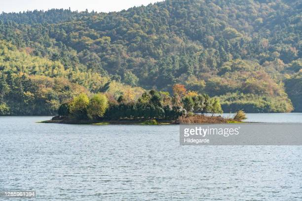 forest island in the middle of the lake - mid section stock pictures, royalty-free photos & images