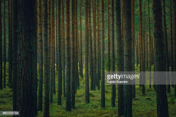 forest ix - suécia imagens e fotografias de stock
