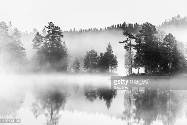 Forest, lake and morning mist - Black and white