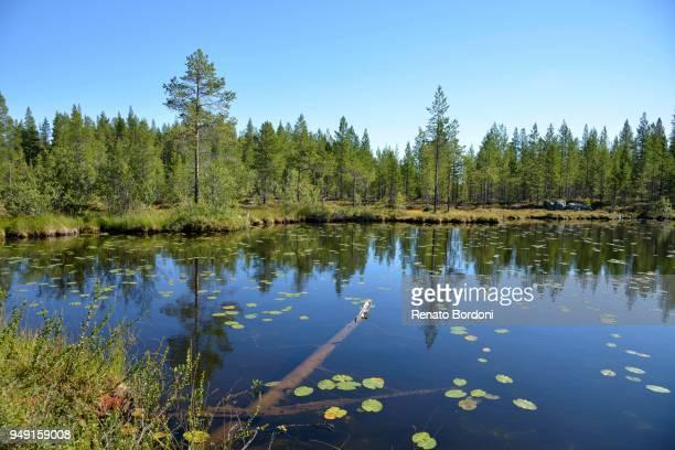 Forest lake, Boertnan, Ljungdalen, Jaemtland County, Sweden