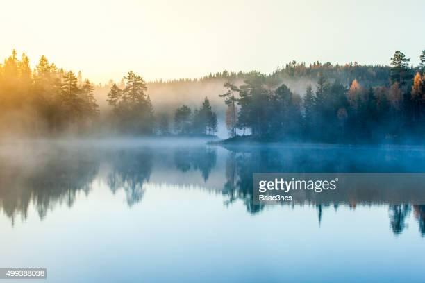 Forest, lake, morning mist and sunrise