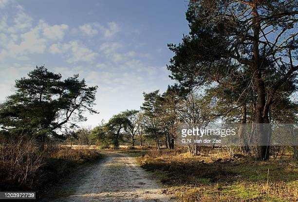 forest landscape - drenthe stock pictures, royalty-free photos & images