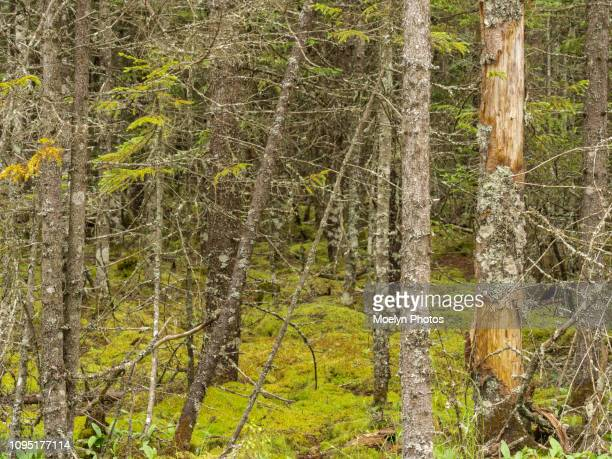 forest landscape - saint john nb - forest floor stock photos and pictures