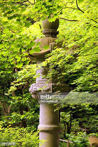 forest lantern - ubc stock pictures, royalty-free photos & images