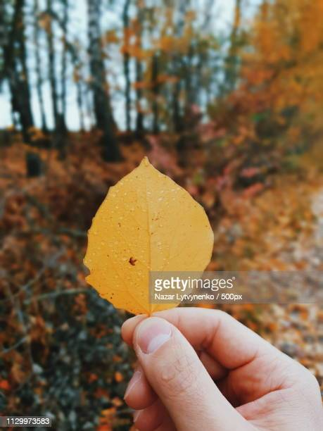 forest leaf - nazar stock photos and pictures