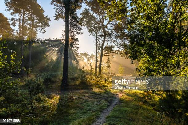 forest light - william mevissen stock pictures, royalty-free photos & images