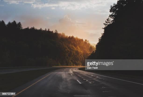 a forest lined highway. - nat stockfoto's en -beelden