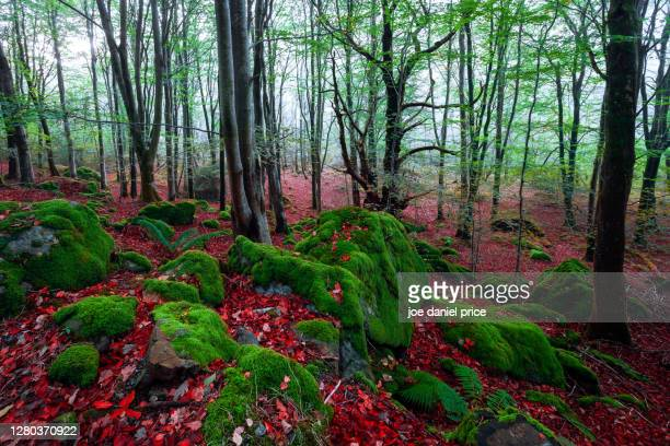 forest, llyn crafnant, snowdonia, wales - landscape scenery stock pictures, royalty-free photos & images