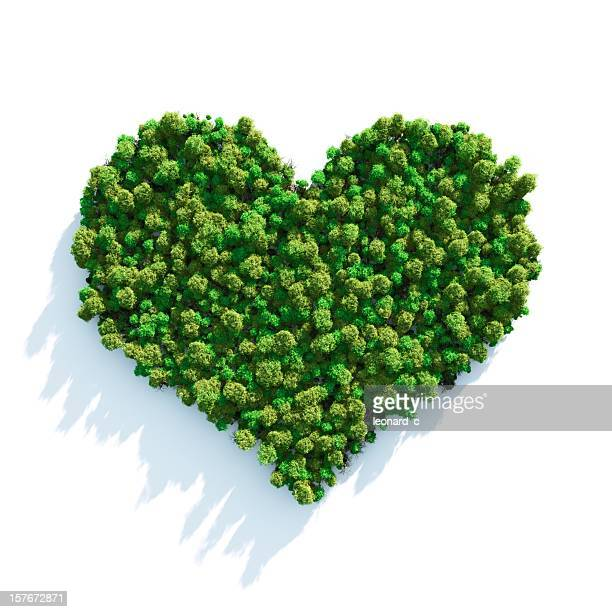 forest love - heart shape stock pictures, royalty-free photos & images