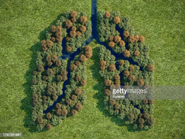 forest lung - biodiversity stock pictures, royalty-free photos & images