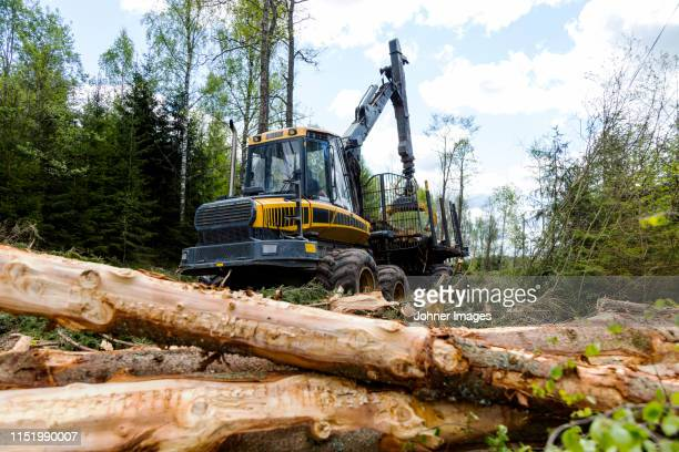 forest machine cutting trees - machinery stock pictures, royalty-free photos & images