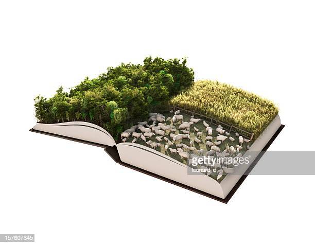 Forest Management-Geschichte