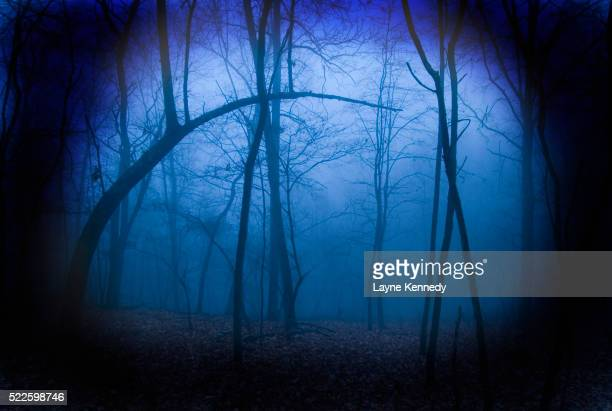 Forest Mist in Evening Light