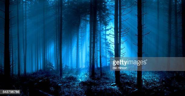 forest moonlight - luz de la luna fotografías e imágenes de stock