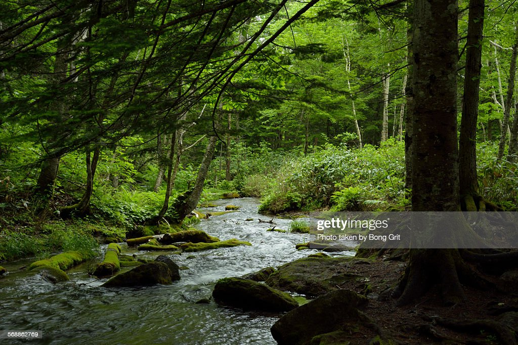 Forest mountain stream : Stock Photo