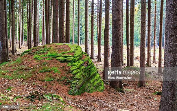 Forest, National Park Harz, Germany