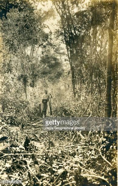 Forest near Corumba Brazil 1908 Artist Percy Harrison Fawcett