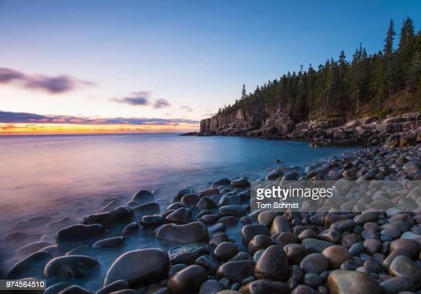 Forest near rocky beach, Otter Cliffs, Acadia National Park, Maine, USA