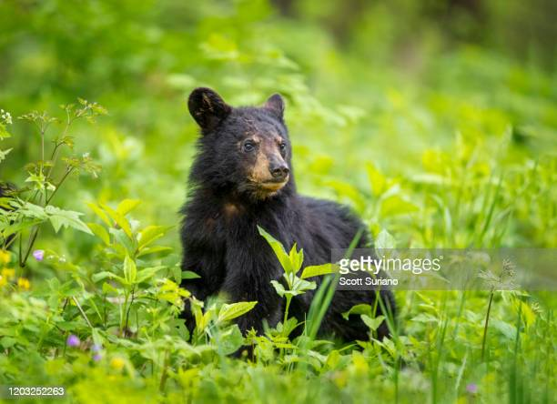forest newbie - shenandoah_national_park stock pictures, royalty-free photos & images