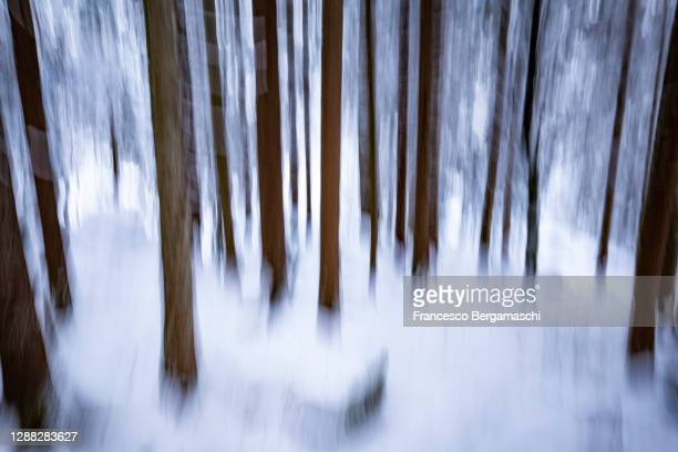 forest of bagni di masino after a snowfall with motion technique. - italia stock-fotos und bilder