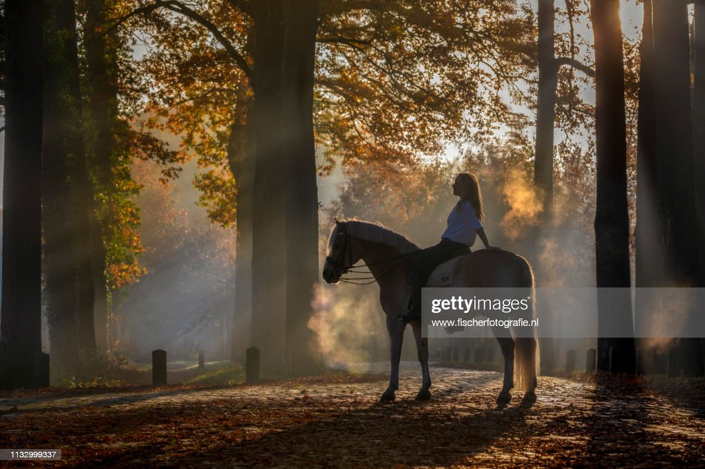 Forest of dreams : Stock Photo