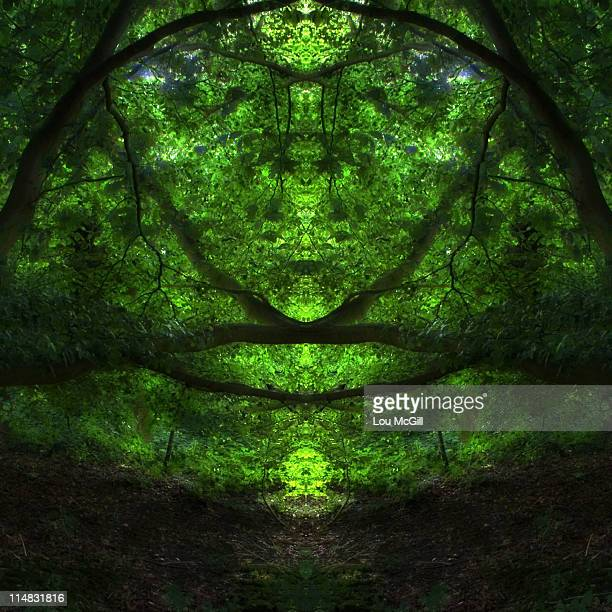 forest of faces - pareidolia stock pictures, royalty-free photos & images