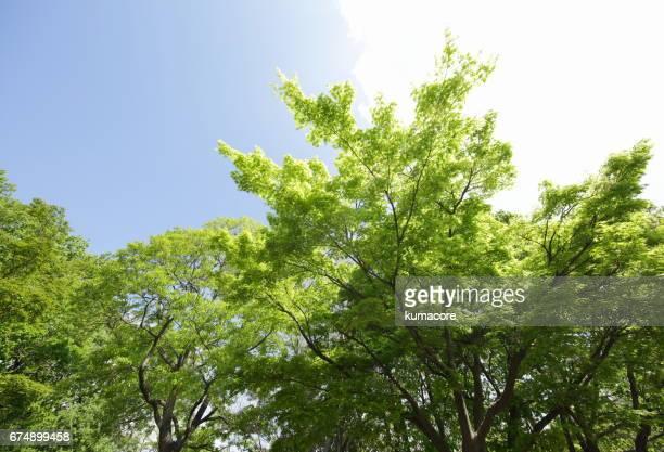 forest of fresh green tree - 青々とした ストックフォトと画像